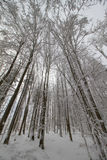 Winter forest under snow. Stock Photos