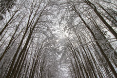 Winter forest under snow. Royalty Free Stock Images