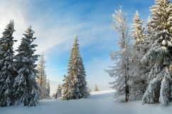 Winter forest under snow Stock Image