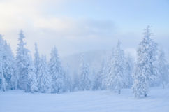Winter forest under the snow Stock Image