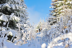 Winter forest. Under the snow in the mountains Stock Photo