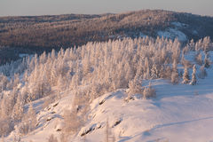 Winter forest under snow on sunset Stock Images