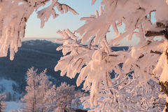 Winter forest under snow on sunset Royalty Free Stock Photos