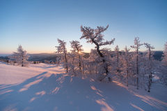 Winter forest under snow on sunset Stock Photos