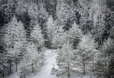 Winter forest under snow Royalty Free Stock Images