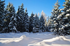 Winter Forest in Upper Austria Royalty Free Stock Photo