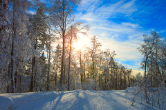 Winter forest. Very beautiful winter royalty free stock photos