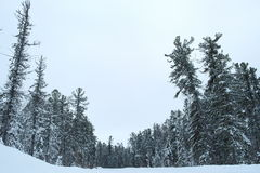 Winter forest. At -35 very beautiful but at the same time dangerous and I would not get lost Royalty Free Stock Image