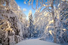 The winter forest stock illustration