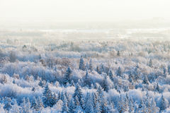 Winter forest view Royalty Free Stock Images