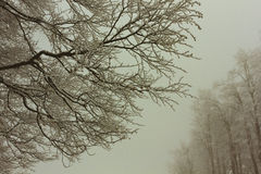 Winter forest view Stock Photography