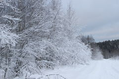 Winter forest. Walk in the beautiful winter forest Royalty Free Stock Photos
