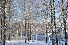 Winter forest it was possible to wander almost indefinitely if it is, of course, would not be so cold. But even when it`s cold-still the beauty around you stock photography