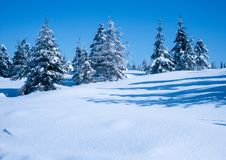 Winter Forest. Illustrations,snow landscapes royalty free stock photos