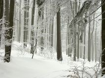 Winter Forest With Frost Covered Trees Stock Images