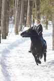 A winter forest. A young woman riding a horse royalty free stock photo