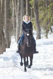 A winter forest. A young woman in warm jacket riding a black horse on snowy ground stock images