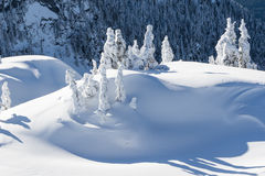 Winter on Forested Mountain Stock Photography