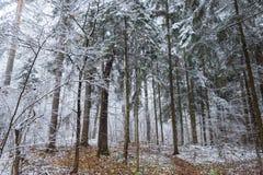 Winter forestThe Dorf von Nikola-Lenivets Stockfotografie