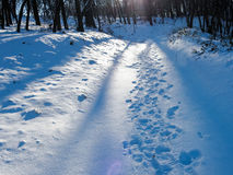 Winter foret path Stock Image