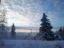 Winter. Forgotten winter. Snow-covered spruce. royalty free stock photography