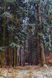 Winter Forrest. Amazing bavarian Winter Forrest in Germany Stock Images