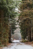 Winter Forrest. Amazing bavarian Winter Forrest in Germany Stock Image