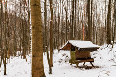 Winter Forrest. Amazing bavarian Winter Forrest in Germany Stock Photography