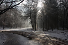 Winter in the forrest. Cold and snowy winter day in the forrest royalty free stock photos