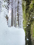 Winter forrest. A fresh fallen snow on the trees in forrest Royalty Free Stock Photo