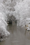 Winter Forrest by River Royalty Free Stock Photos