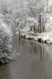 Winter Forrest by River stock photo