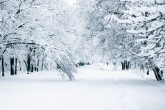 Winter Fotest. Photos of fabulous winter forest Stock Image