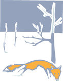 Winter Fox Stock Images