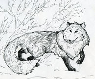 Winter fox. Fox walking on the snow in winter. Ink drawn sketch Royalty Free Stock Photos
