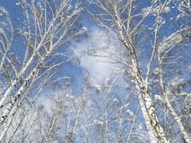 Winter fragmentary landscape. NA lot of snow and light. Freezing day.nlandscape in a frosty day with snow Stock Photo