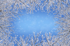 Winter frame from bare branches covered with ice crystals against a blue background with a snowy bokeh, copy space, greeting card. For christmas or new year royalty free stock photography