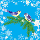Winter frame and birds. Royalty Free Stock Image