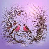 Winter frame with bullfinches. Stock Photo