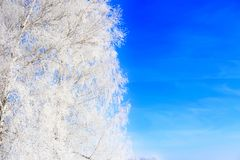 Winter framework. White frozen trees and blue sky royalty free stock photo