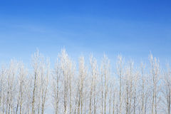 Winter framework. White frozen trees and blue sky. Royalty Free Stock Photography