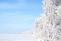 Winter framework. White frozen trees and blue sky. Royalty Free Stock Photos