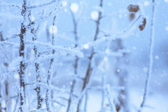 Winter freeze background Stock Images