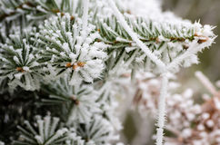 Winter freeze Royalty Free Stock Photo