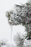 Winter freezing Royalty Free Stock Photo