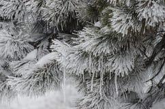 Winter freezing Royalty Free Stock Photography
