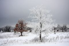 Winter Frost. Frosted tree on a winter morning landscape Stock Photos