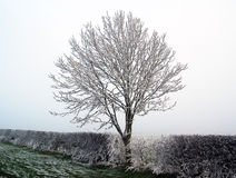 Winter frost Royalty Free Stock Photography