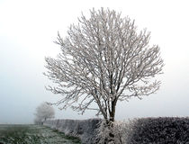 Winter frost Royalty Free Stock Photos