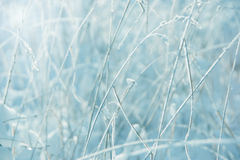 Winter frost Royalty Free Stock Photo